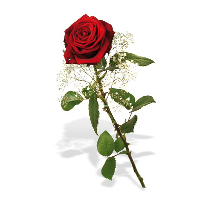 1ne rose