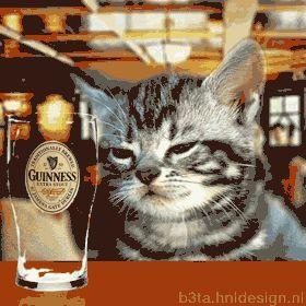 alk Katze