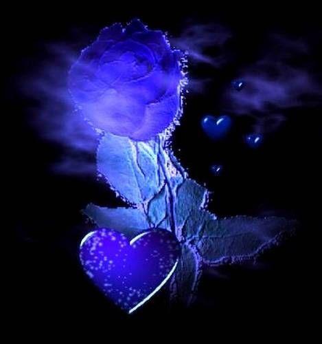 blaue rose1
