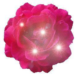 blinkende rose