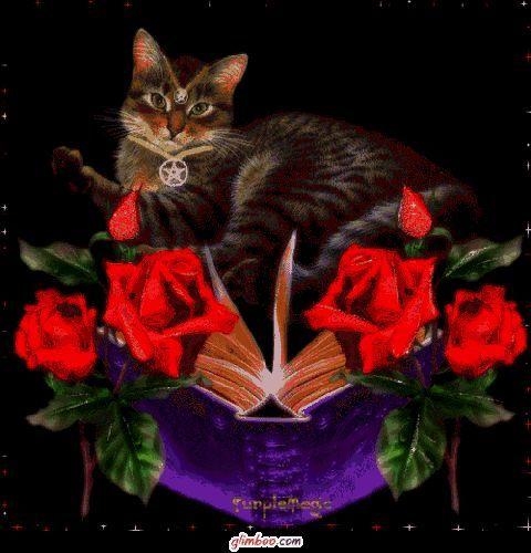 Blumen mit Katze
