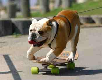 bulldog spiele