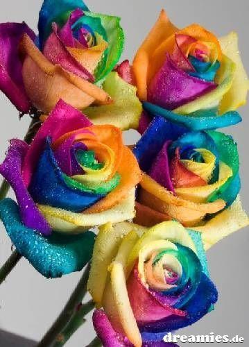 bunte rosen