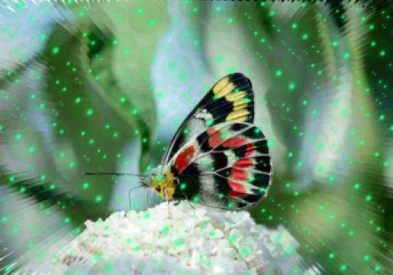 butterfly spiele
