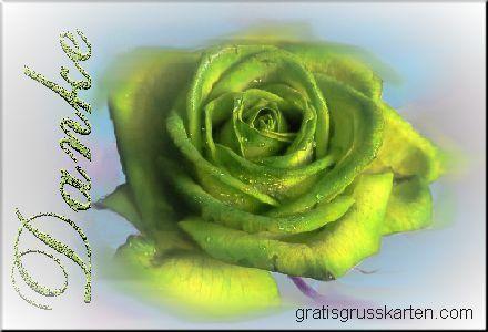 Danke Rose gelb
