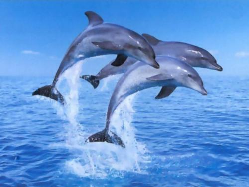 delfin spiele kostenlos