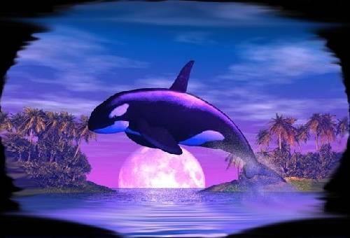 kostenlose delfin spiele