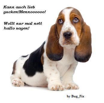 Dog Hallo