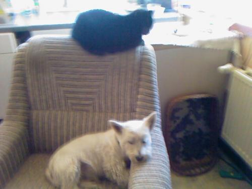 ein hund  eine katz und ein sessel