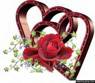 Herzen und Rose