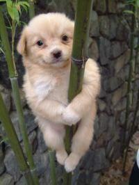 Hund am Bambusbaum hängend