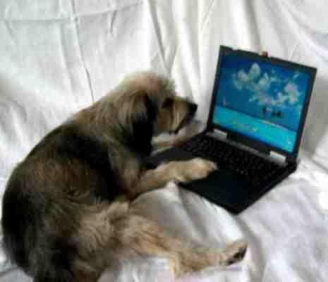 hund am leptop