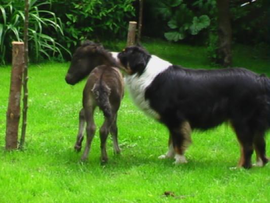 hunde und pferd