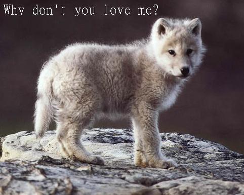 junger wolf
