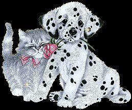 katze und hund am schmusen