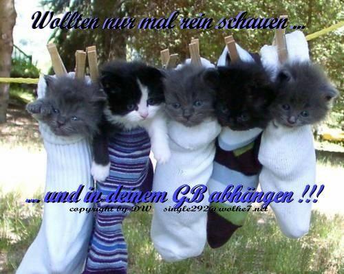 Katzenbabys  *  DW
