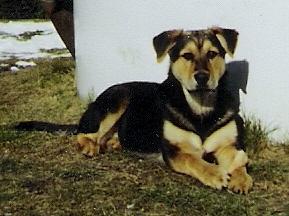 Kleiner Rudi