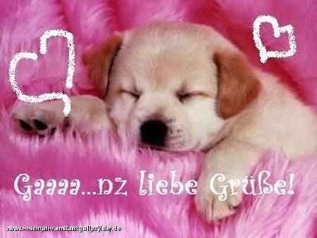 liebe grüße hund