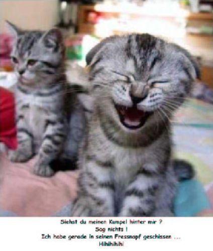 Lustige katzen kostenlose g stebuchbilder for Witzige karten kostenlos