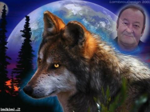 mein Wolf