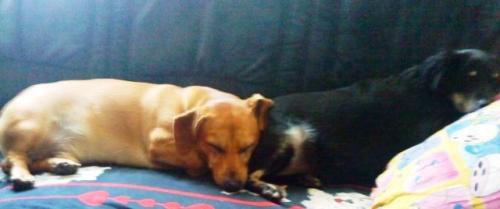 Rocky und Mausi