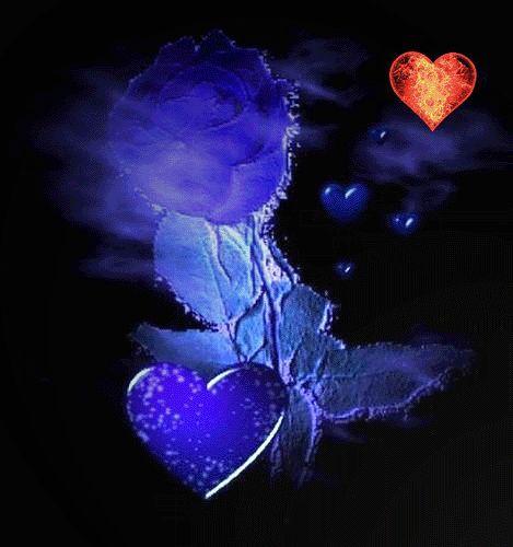 Rose + Herzen