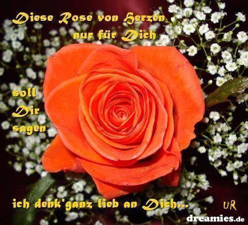 rose von herzen