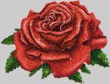 Rose,rot