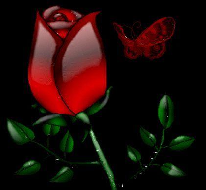 rose+schmetterling