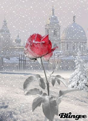 rose+schneeflocken