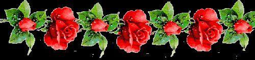 rotes rosenband