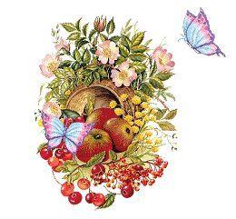 Schmetterlingsblumen