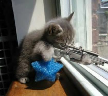 sniper-cat