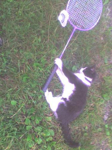 sport cat