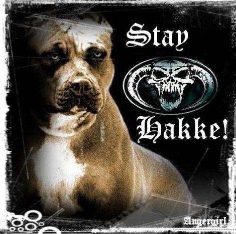 STAY HKKE
