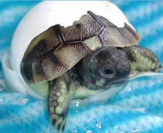 Süße Schildkröte