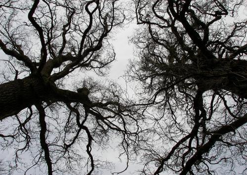 SW-Bäume