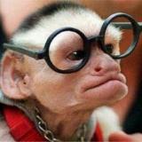 Äffchen mit einer Brille