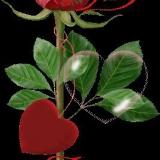animierte rose