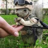 armyeichhörnchen