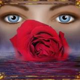 Augen+Rose