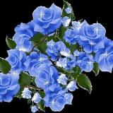 blauer rosenstrauß