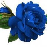 blaues Rosenband