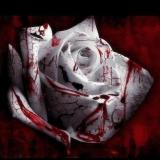 Blutrose
