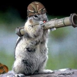 BW Hörnchen