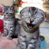 cats smile
