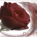 Danke Rose rot