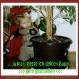 DW  ** Baum