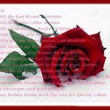 DW  **  Rose
