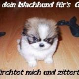 gb wachhun